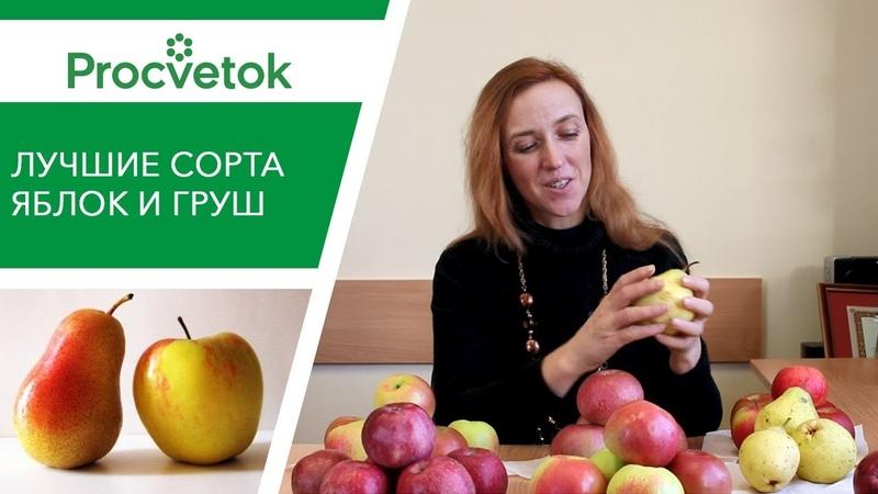 Какие сорта яблонь и груш посадить Обзор сортов для Средней полосы