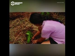 В Коста-Рике дети высадили лес из 24 тысяч деревьев