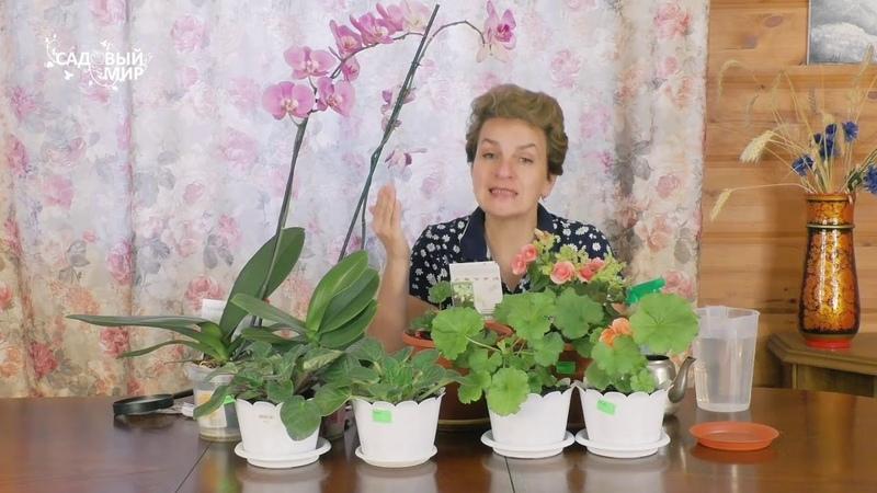 Скорая помощь для комнатных цветов