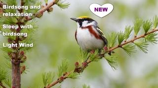 birdsong and relaxation/sleep with birdsong/birdsong for relaxation/sleep night sounds/nature song