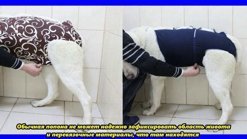 Попона ветеринарная с затяжками