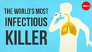 What makes tuberculosis (TB) the world's most infectious killer? - Melvin Sanicas