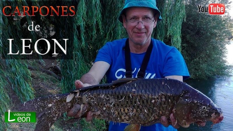 🐟 COMO PESCAR CARPONES 🐟 Pescar CARPAS con TAPITA de LEON