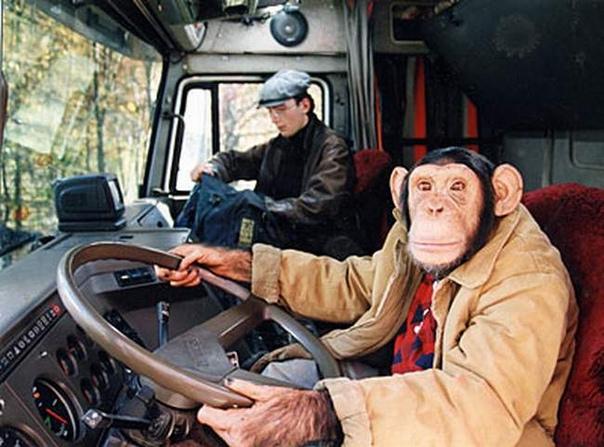 Прикольный картинки про водителей, днем