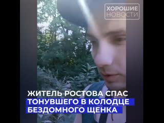 Житель Ростова спас тонувшего в колодце бездомного щенка