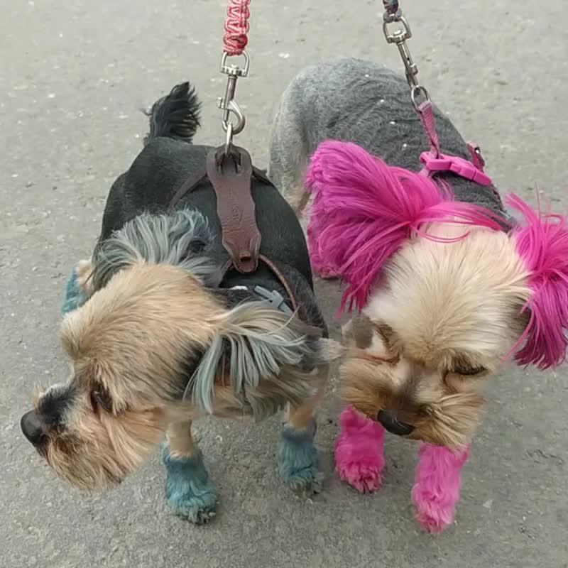 Крутые модные собачки.