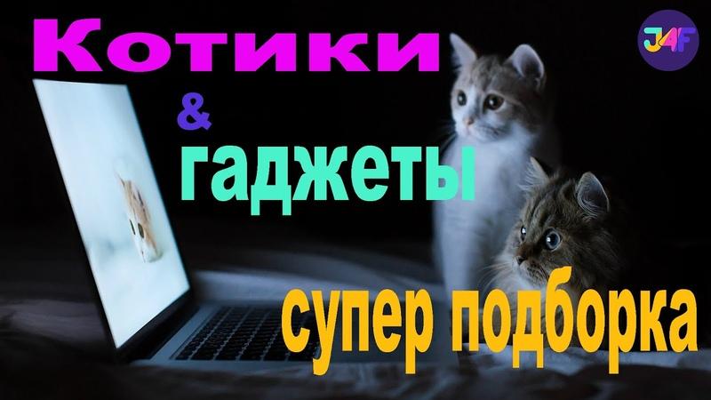 Cats gadgets funny video Pets Gadgets Котики и Гаджеты Супер Подборка с Озвучкой