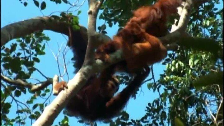 BBC Жизнь млекопитающих 10 Пища для размышлений
