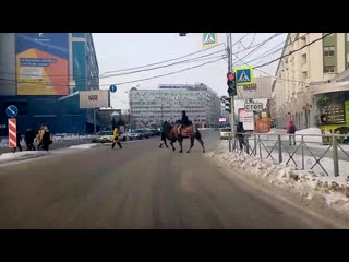 Верблюды на площади ленина
