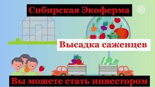 Сибирская Экоферма. Высадка саженцев . Вы можете стать совладельцем динамично развивающегося бизнеса