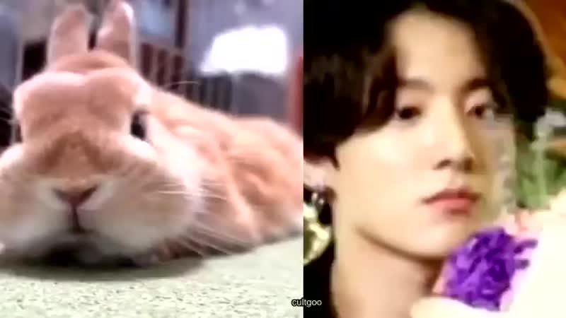 Bunnies sniffing and their noses twitching heartbreak.mp4