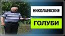 Николаевские голуби, Геннадий Мацинов Покусал Голубя из станицы Кагальницкой!