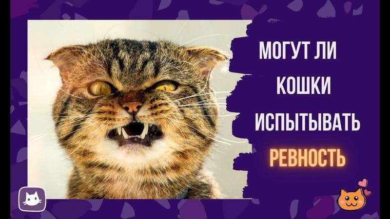 Могут ли кошки испытывать ревность