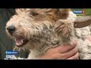 Новосибирские школьники изготовят протез для собаки на 3D-принтере