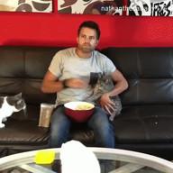 id_53154 Как смотрит сериалы человек, у которого несколько котов 😁  #gif@bon