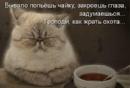 Фотоальбом Олеси Крутых