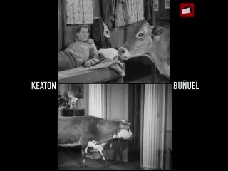 Луис Бунюэль и Бастер Китон