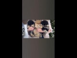 Video by Natalya Fedortsova