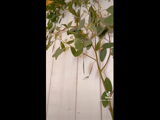 Видео от FiORi - студия цветов и подарков.