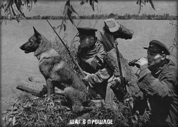 Как 150 пограничных псов «порвали» полк фашистов в рукопашке На Черкащине есть уникальный памятник 150 пограничным псам, которые «порвали» полк фашистов в рукопашном бою Эта единственная за всю