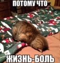 Артамонов Ваня   Шигоны (село)   36