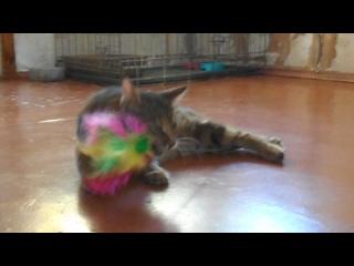 кошка с мраморнями лапками