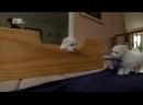 «Симпатичные щенки Бигль, Бишон фризе, Доберман» Познавательный, 2013