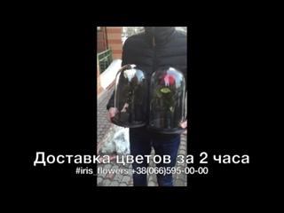 Доставка цветов Дрогобыч