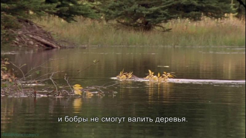 BBC Йеллоустоун Борьба за жизнь 3 Осень Документальный природа животные 2009