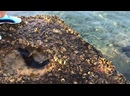 Морской огурец