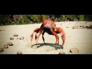 Танцующий краб | crab rave
