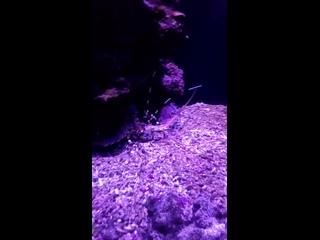 океанариум в краб