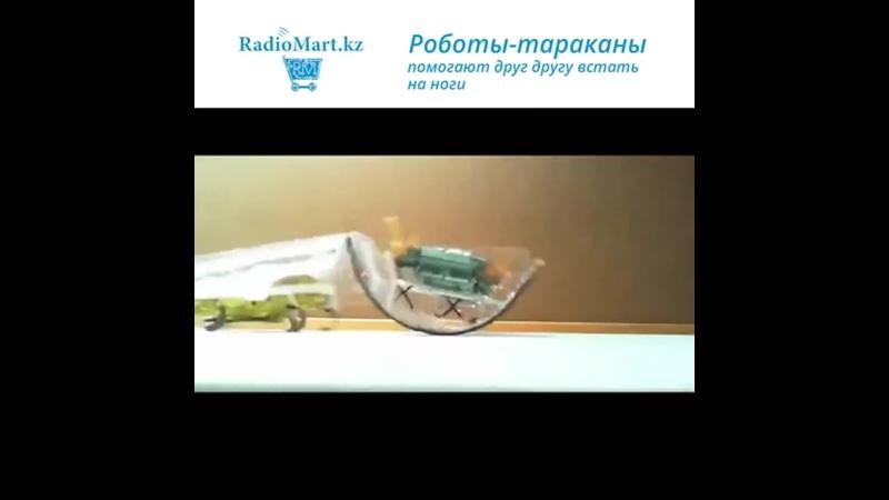 Роботы тараканы помогают друг другу mp4