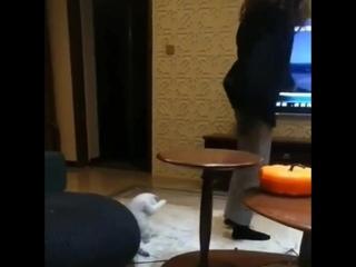 Кот вообще не понимает, что происходит