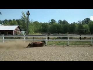 Конь лошадь упал упала и хитро сбежал сбежала за забор хитрый