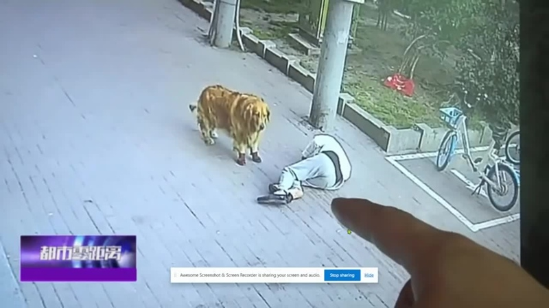 Dog Corners Cat After It Plummets On To Pensioner s Head LADbible