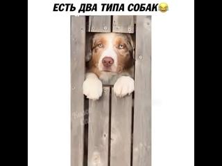 Три вида собак есть.Третья которая всех обтявкает