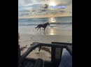 Великолепный бегущий жеребец