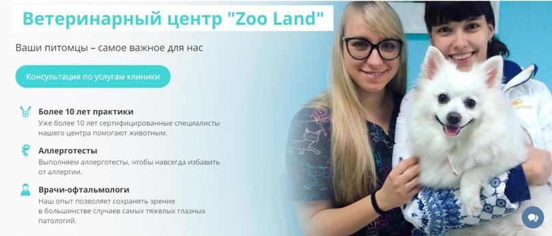 Кейс: комплексное Интернет-продвижение ветклиники ZooLand, изображение №1