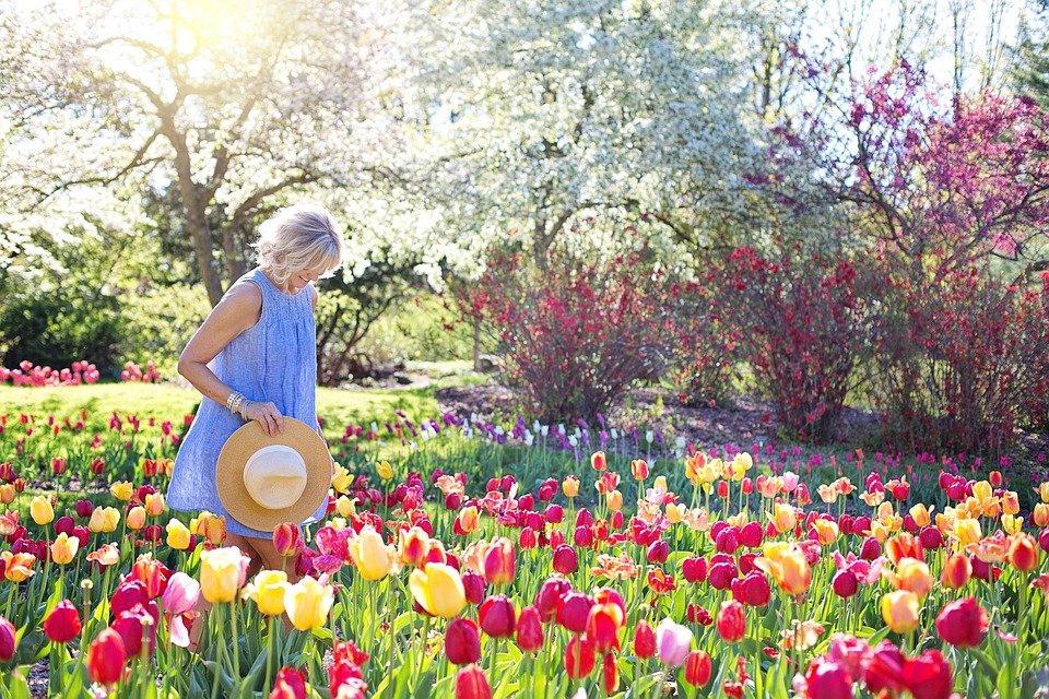 тюльпаны девушка