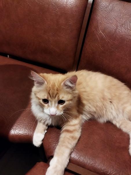 Здравствуйте, пропал котик, любимец всех домочадцев 😔 Про...