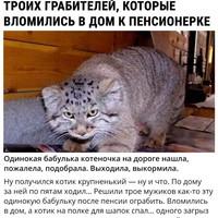 Фотография Романа Неведомского