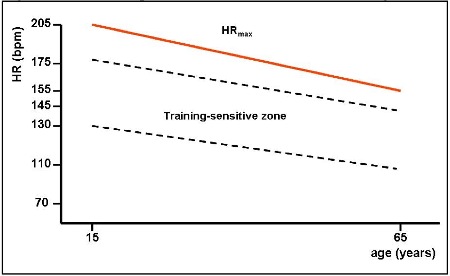 Взаимосвязь между максимальной частотой сердечных сокращений и возрастом