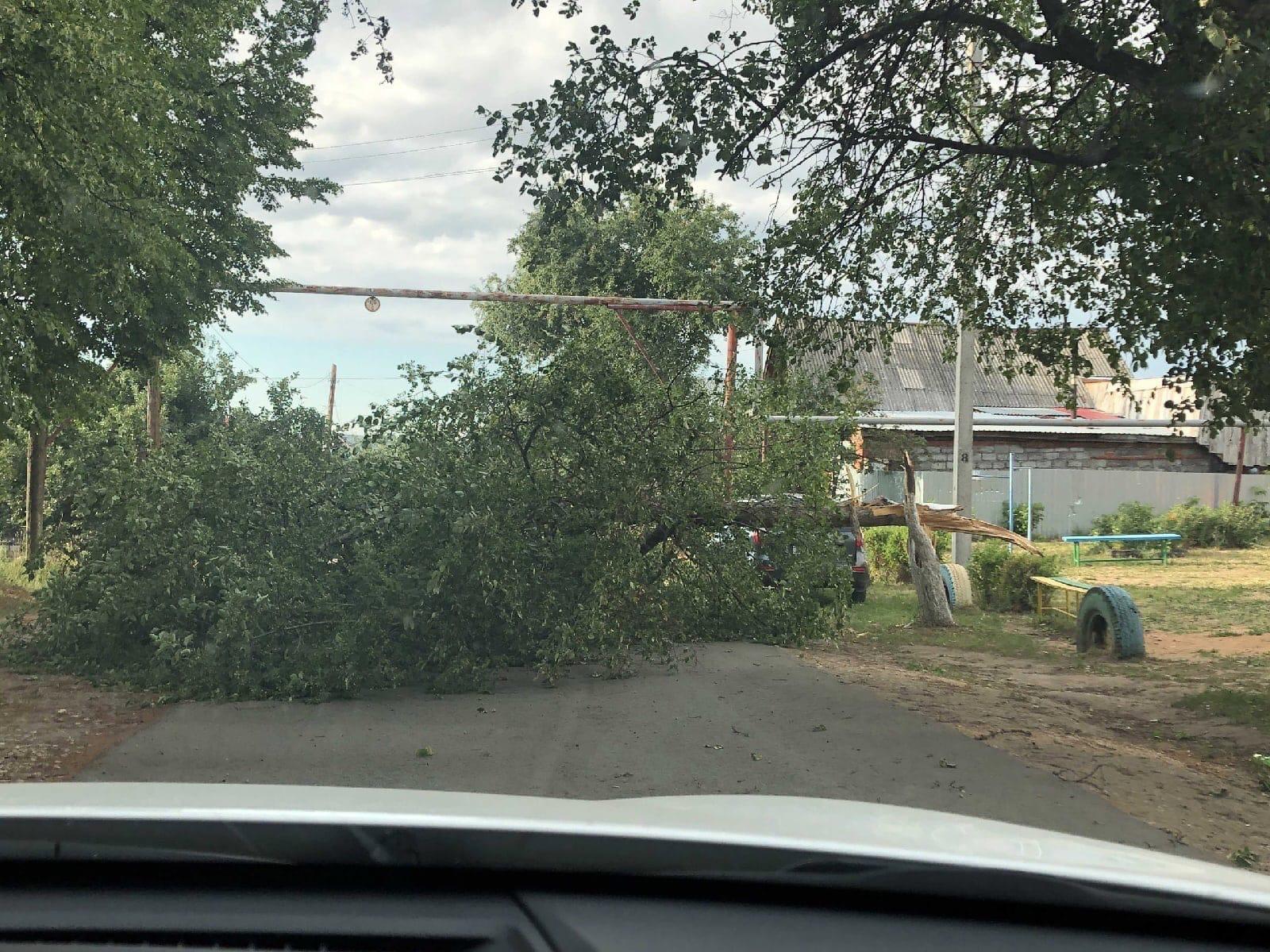 Напротив детского сада №14 дерево упало, перекрыло