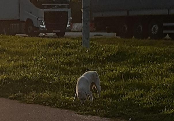#сафоново #миниприюттеплыеруки #собаки ‼Внимание! ...