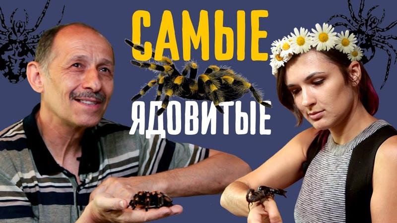 Андрей Затока о находчивых пауках и светящихся скорпионах