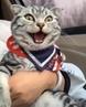 Кот едет в Холмогоры