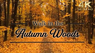 4K Autumn Woods TV Background with Music. Walk in the Fall Foliage, Forest & Scenery, Autumn Leaves