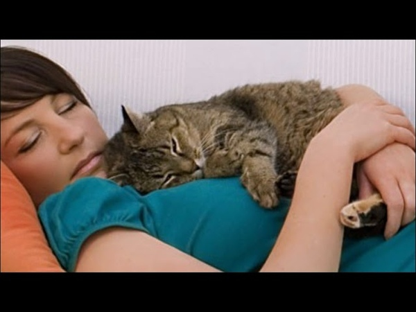 Почему кошка ложится на человека? Интересные факты о кошках Приколы с кошками