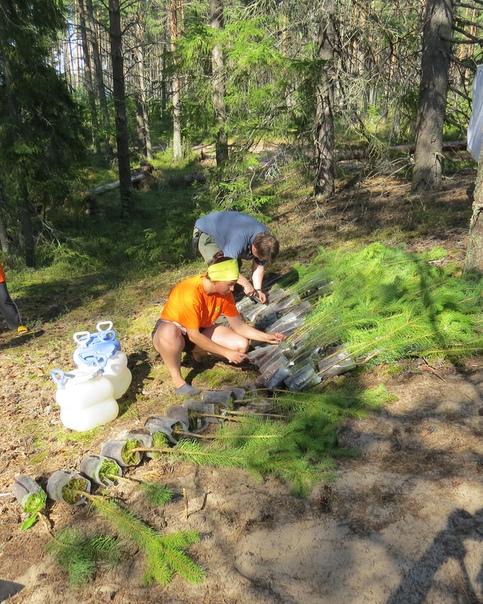 Подготовка деревьев к посадке